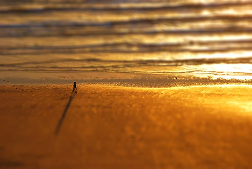 Alone on Rhossili Beach - Tiltshifted | by Mr Ush
