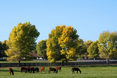 Horse Ranch | by Damian Gadal