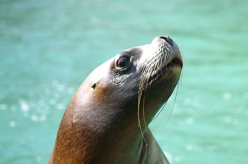 Seal | by Rev Gear