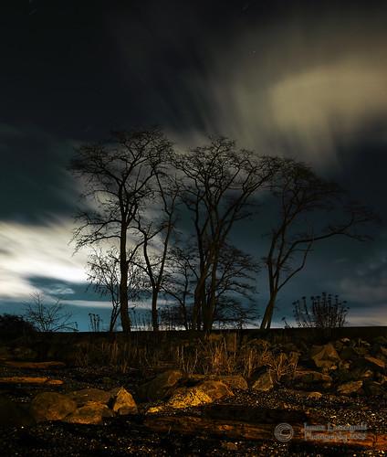 longexposure tree night canon geotagged bravo joshuatree surrey crescentbeach whiterock janusz leszczynski 3345 blackiespitpark anawesomeshot 5dmarkii 5d2 geo:lat=49059526 geo:lon=12288326