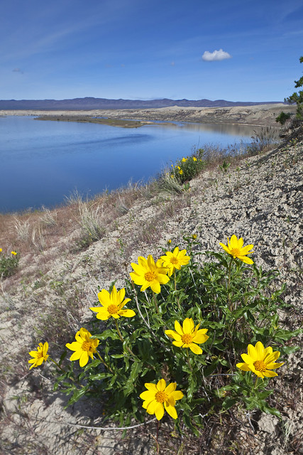 Columbia River in Hanford Reach National Monument