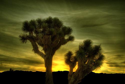 california sky tree sunrise skyscape desert joshua explore mojave wikipedia hesperia hdr photomatix 200711 anawesomeshot