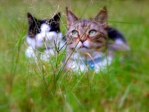 In The Grass | by r♥biη elizabeth