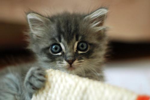 Kittens! | by nicsuzor