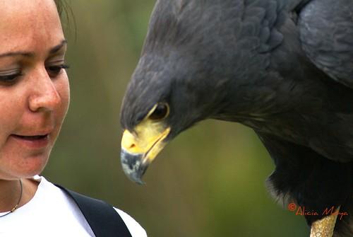 Montse platica con el águila real