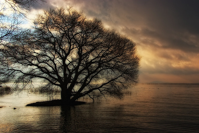 A Lakeside Tree