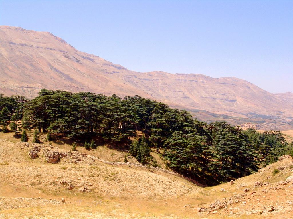 The Cedars of Lebanon (Al Arz) DSC07411