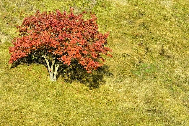 Italy, lonely tree