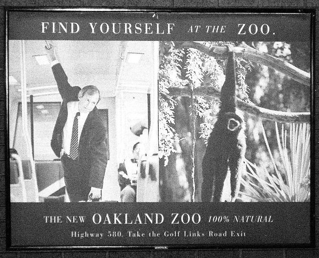 Find yourself at the zoo
