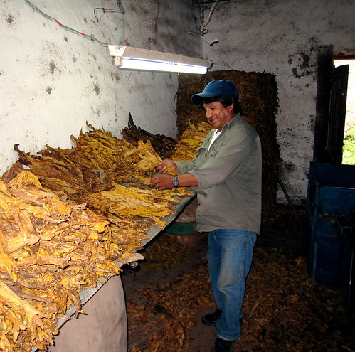 Monterico Tobacco Farm | by truthaboutit