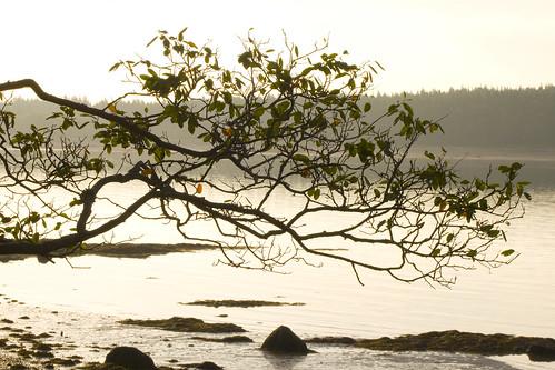 ocean coast maine steuben downeast pigeonhill mywinners