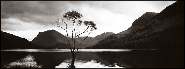 Solitary Tree 2 - Buttermere,Lake District National Park (EXPLORED 04/02/09 #333)