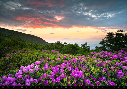 travel flowers sunset vacation mountains nature clouds sunrise landscape outdoors photography nc spring seasons asheville blossoms scenic northcarolina adventure parkway rhododendron nd carolina bloom vista appalachian polarizer overlook dramaticsky appalachia blueridgemountains hdr highdynamicrange blueridgeparkway blueridge daveallen blooming 1735mm wnc brp westernnorthcarolina craggygardens ashevillenc rhodies craggymountains d700 daveallenphotography mygearandme mygearandmepremium mygearandmebronze mygearandmesilver mygearandmegold mygearandmeplatinum mygearandmediamond musictomyeyeslevel1