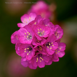 microflowers II