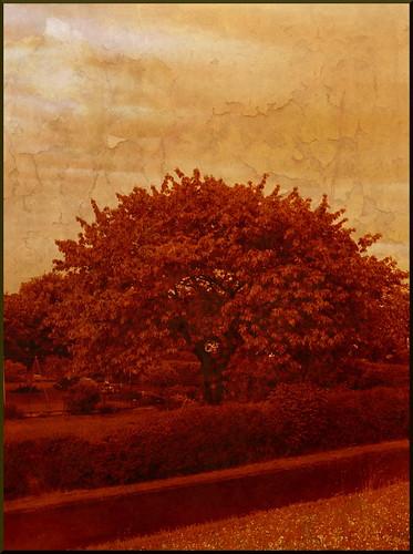 red orange tree public geotagged creativecommons bremen 2008 byncsa greengardens cosmonautirussi appliedtexture
