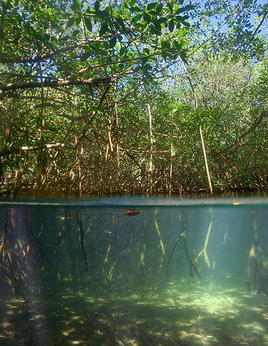 art photography bay photo jonathan charles mangrove bermuda hungry jonathancharles