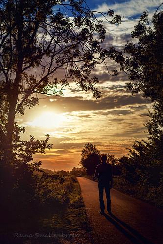 sunset sun netherlands zonsondergang bomen path pad groningen warfhuizen reinasmallenbroek