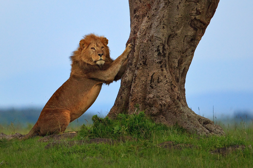 Image: Scratching Post