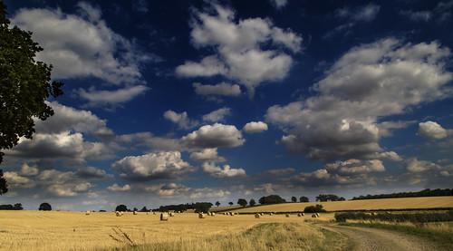 uk england grass northamptonshire harvest hay northants polebrook