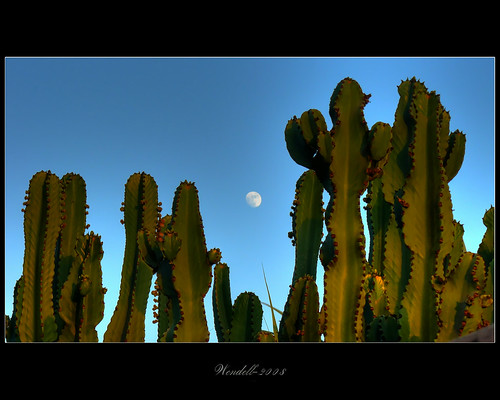 Moon Over Cactus | by ...-Wink-...