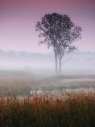 morning sky mist tree misty fog wow landscape dawn purple foggy meadow 100v10f daybreak d60 twtmeblogged mywinners abigfave topofthefog superaplus aplusphoto karmanominated ysplix