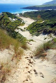 sandfly beach, otago peninsula   by hopemeng