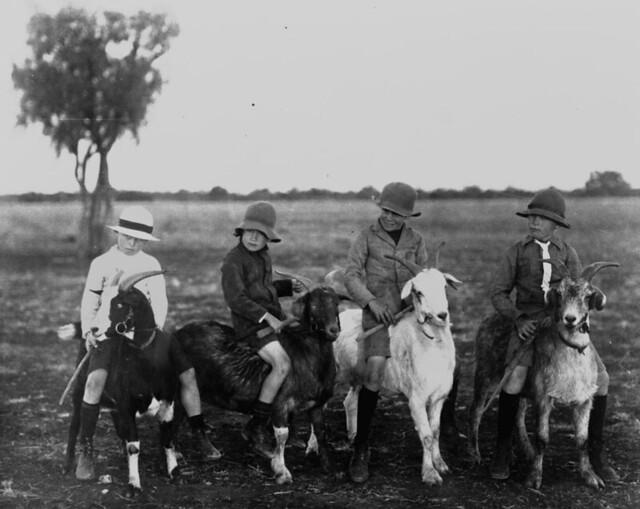 Four boys riding goats, ca. 1918