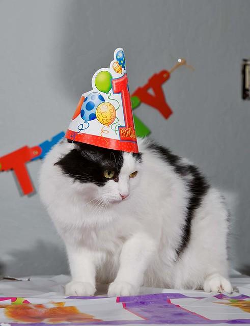 Marky the Birthday Boy - 1 year old