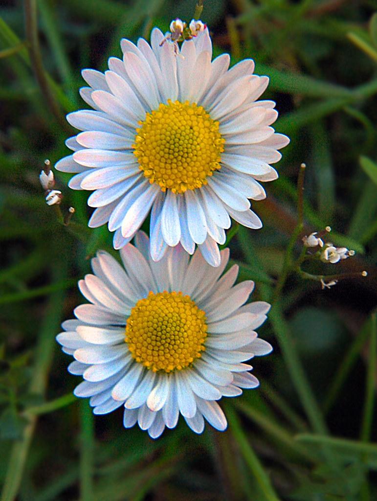 Fiori Di Primavera.Fiori Di Primavera Roberto F Flickr