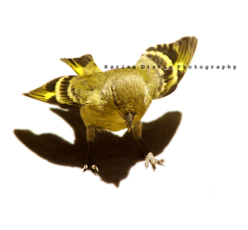 Bird Shadow | by Karina Diarte de Maidana