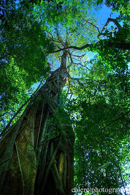 Bosque El Imposible Ahuachapan El Salvador Alvaro Calero Flickr