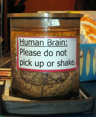 Human Brain: Please do not pick up or shake | by Hatchibombotar