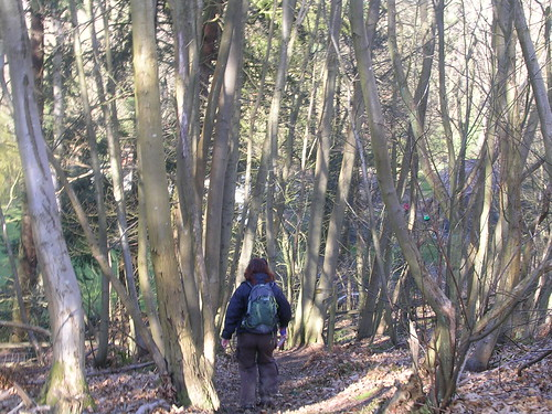 Through a wood Amberley to Pulborough