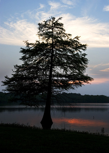 sunset sky sun lake tree 20d water clouds geotagged evening calm shore cypress scenicwater goldstaraward caseymorris