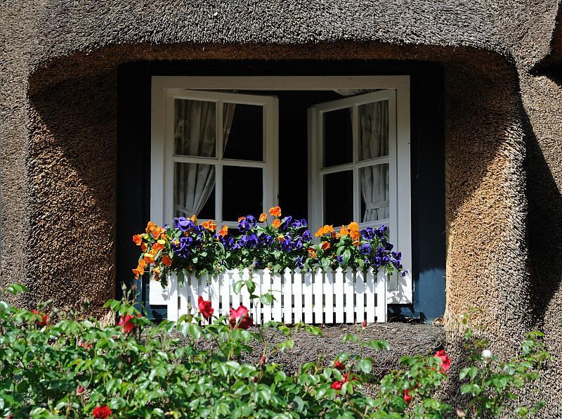 3556 Fenster mit Blumenkasten und blühenden Blumen - Recht… | Flickr