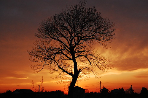 sunset tree japan inzai