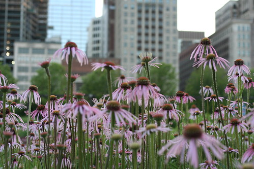 Skyline of flowers | by Rick Aiello