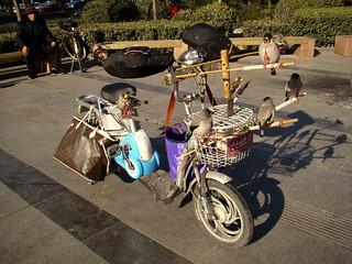 bird scooter | by istolethetv