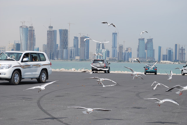 pigeons in doha corniche | D@LY3D | Flickr
