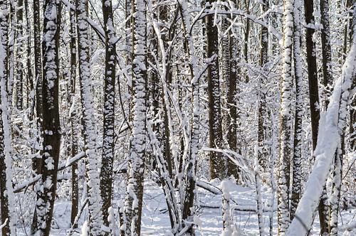 park wood nyc trees winter white snow ny cold sigma explore statenisland d300 2470mm blueheronpark robertcatalano