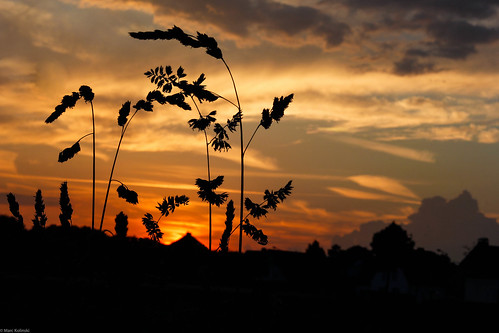 sunset sky zeiss germany deutschland evening cornfield sonnenuntergang himmel makro kornfeld abends grevenbroich 60d canon60d