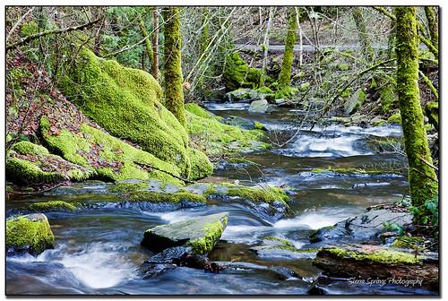 california road water northerncalifornia creek moss stream country eldoradocounty mountainstream ifyoucouldseewhatisee sierraspringsphotography karenschmautz