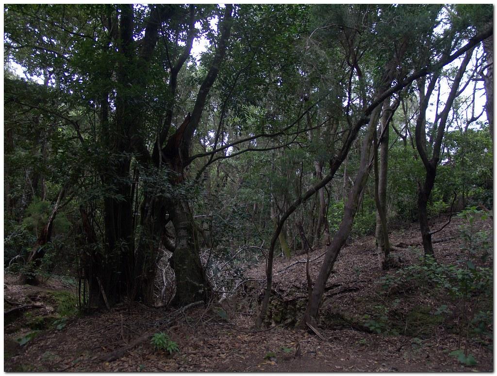 Las Mercedes Bosque En Perpetuo Verdor Con Habitantes De F Flickr