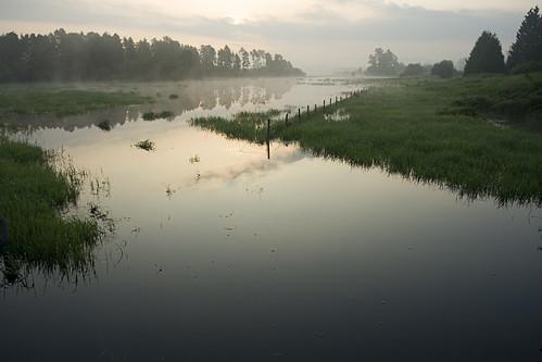 morning trees mist reflection fog dawn spring flood britishcolumbia may langley fortlangley morningmist floodedfield kvdl