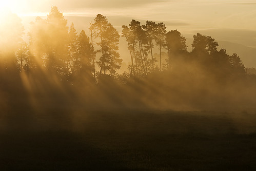 morning trees summer mist silhouette sunrise landscape dawn early herecomesthesun kvdl