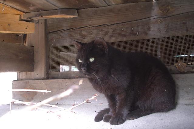 Today's Cat@20080714
