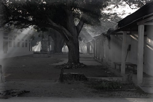 tree smoke sunbeams easttimor oecussi godrays pantemacassar rtwoverland