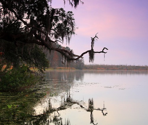 morning autumn trees usa water sunrise canon reflections landscape moss contest lakes southcarolina goosecreek tamron1750 40d canon40d vosplusbellesphotos