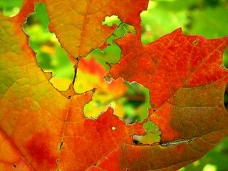 Holey Autumn