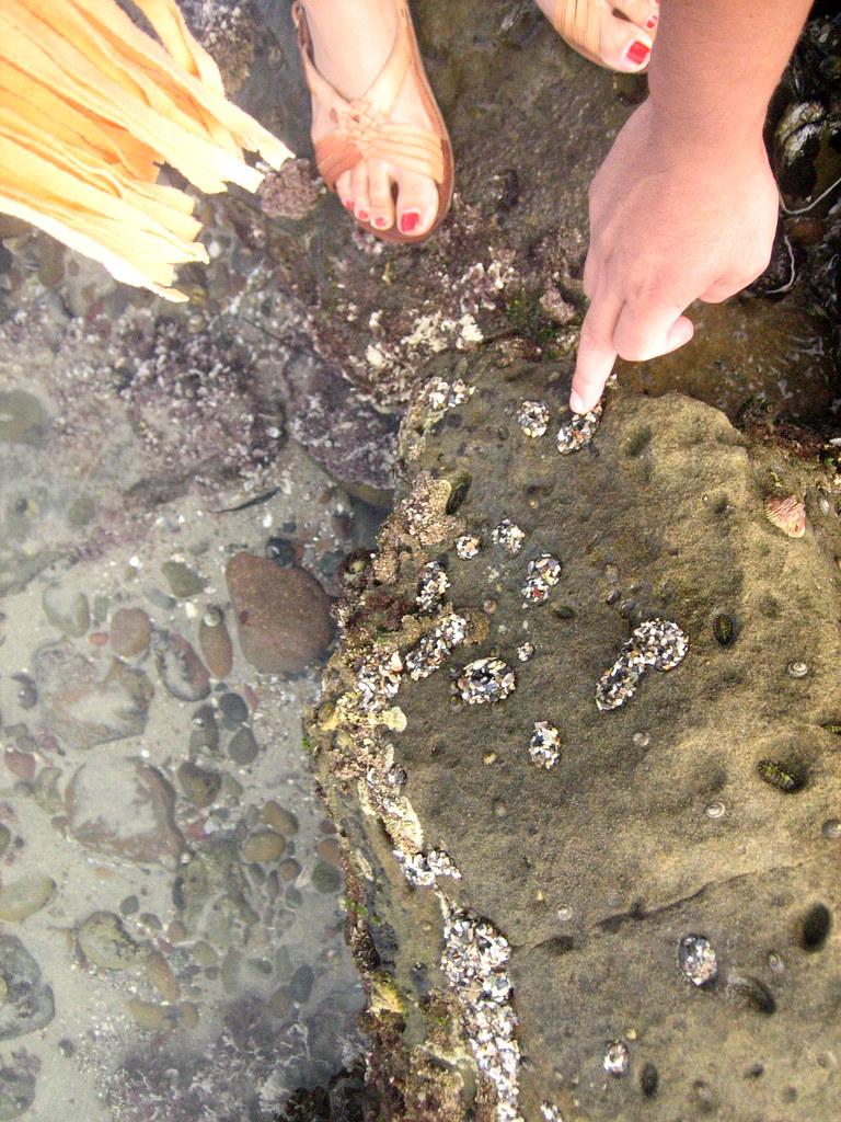 blacks beach with eduardo